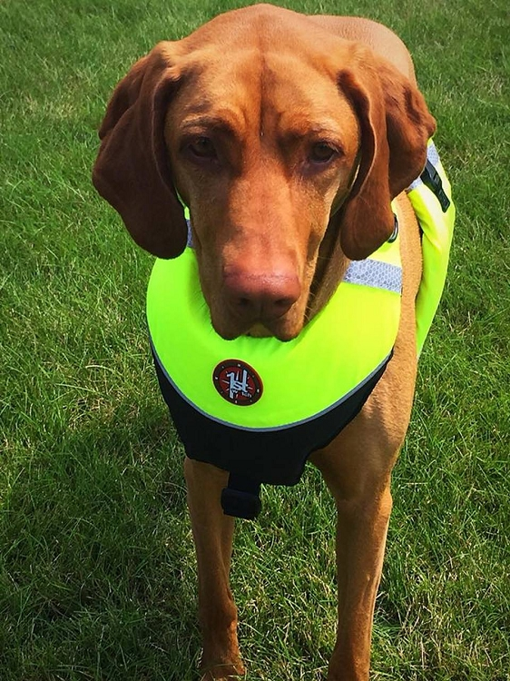 K-9 FLOAT VEST - FIRST WATCH FLOTATION DOG VEST (Style Number : AK-1000-HV)